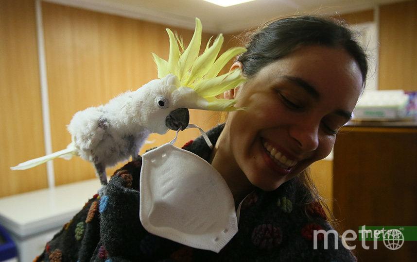 Попугай Флинт решил попробовать маску репортёра Metro. Фото Василий Кузьмичёнок