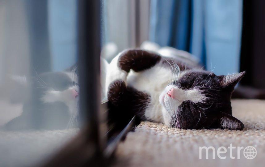 Во Франции обнаружили первую кошку с коронавирусом. Фото pixabay.com