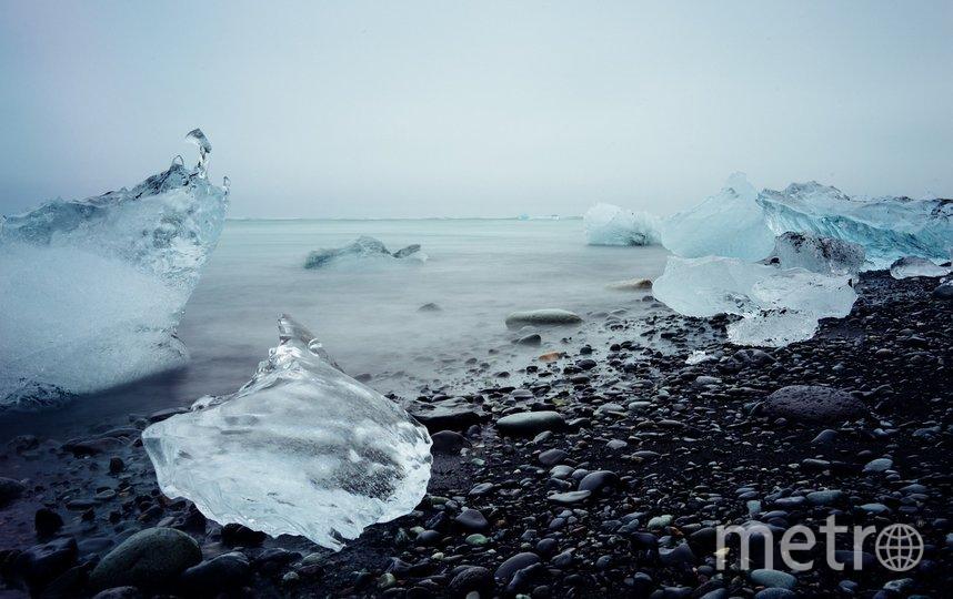 В Петербурге учёные впервые за 130 лет провели перепись арктических моллюсков. Фото pixabay.com