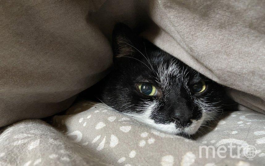 Домашние животные тоже нуждаются в личном пространстве. Фото Getty