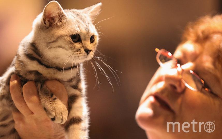 Не все коты любят, когда их гладят – причина в гиперчувствительной коже. Фото Getty