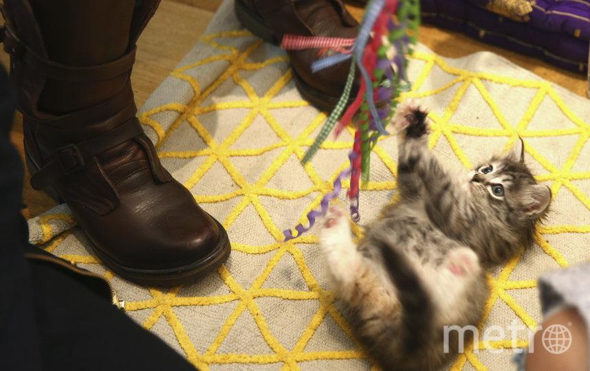 Ветеринары не советуют играть с котами в период с 8 утра до 8 вечера. Фото Getty