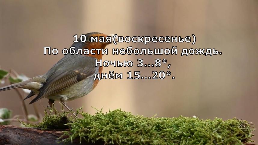 Прогноз погоды на 10 мая 2020 года в Москве. Фото Канал Meteoinfo, Скриншот Youtube