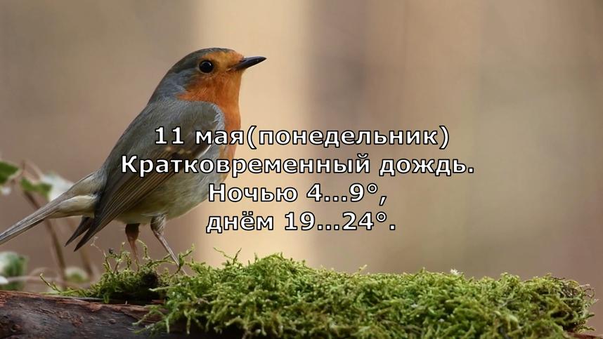 Прогноз погоды на 11 мая 2020 года в Москве. Фото Канал Meteoinfo, Скриншот Youtube