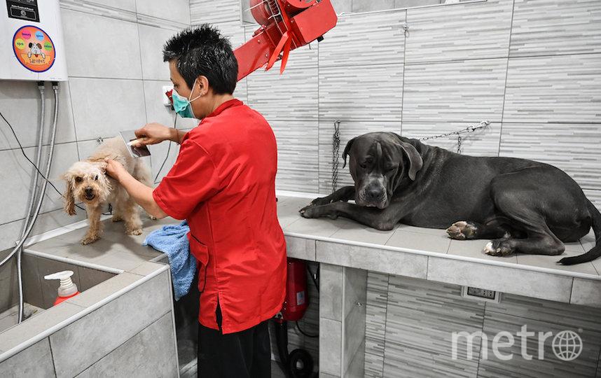 Стрижка собак в груминг-салоне в Риме. Фото AFP