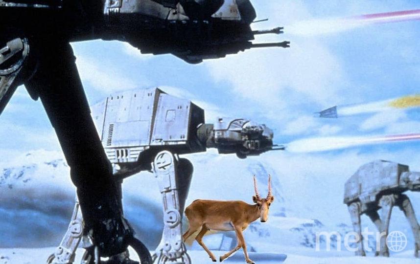 Сайгак на битве Звёздных войн. Фото скриншот @gazetametro