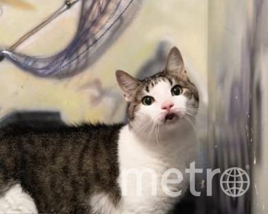 """Бывшие хозяева расстались с кошкой во время карантина. Фото республика Кошек и котов , """"Metro"""""""
