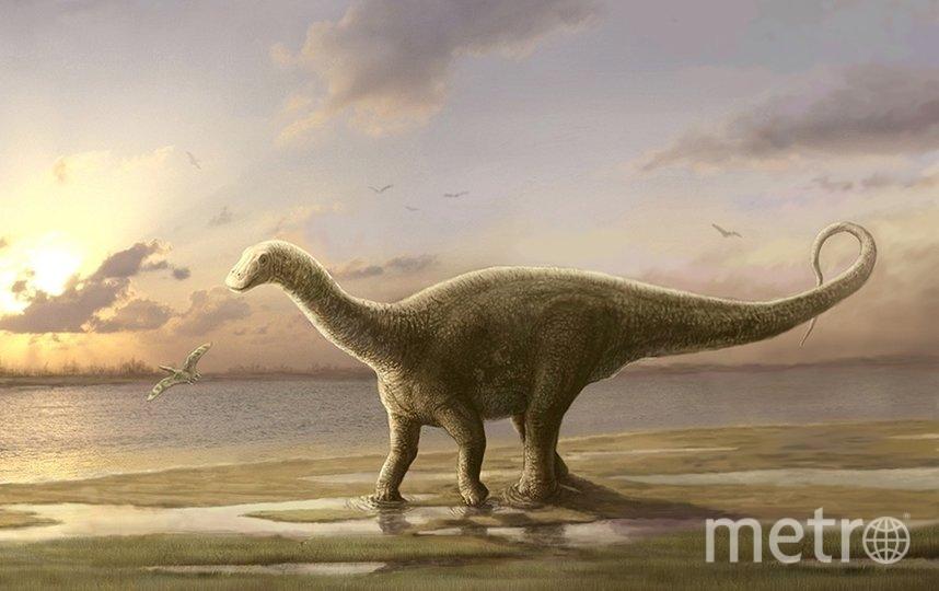 """Представитель семейства дикреозаврид, рисунок учёного. Фото Николай Зверьков, """"Metro"""""""