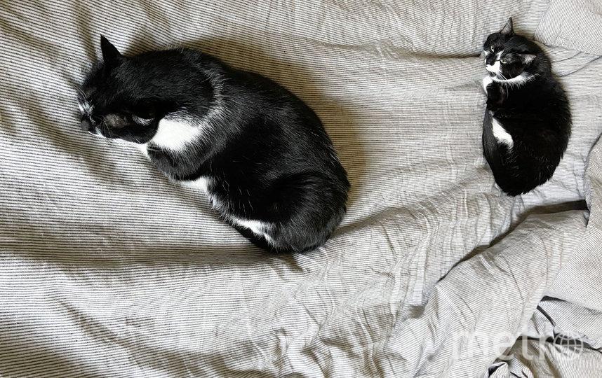 Возможно, котам тоже придётся соблюдать дистанцию. Фото Getty