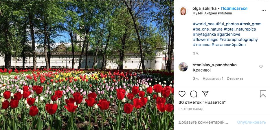 В Москве вовсю цветут тюльпаны. Фото скриншот Instagram @olga_sokirka