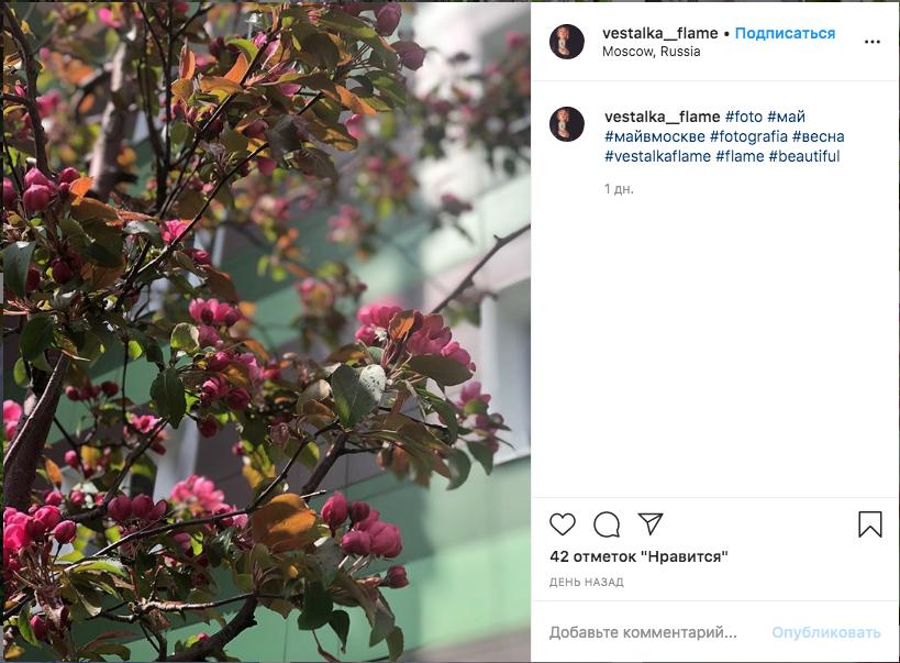 Цветущая яблоня. Фото скриншот Instagram @vestalka__flame