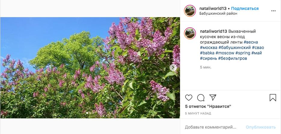 Сирень в Бабушкинском районе столицы. Фото скриншот Instagram @nataliworld13