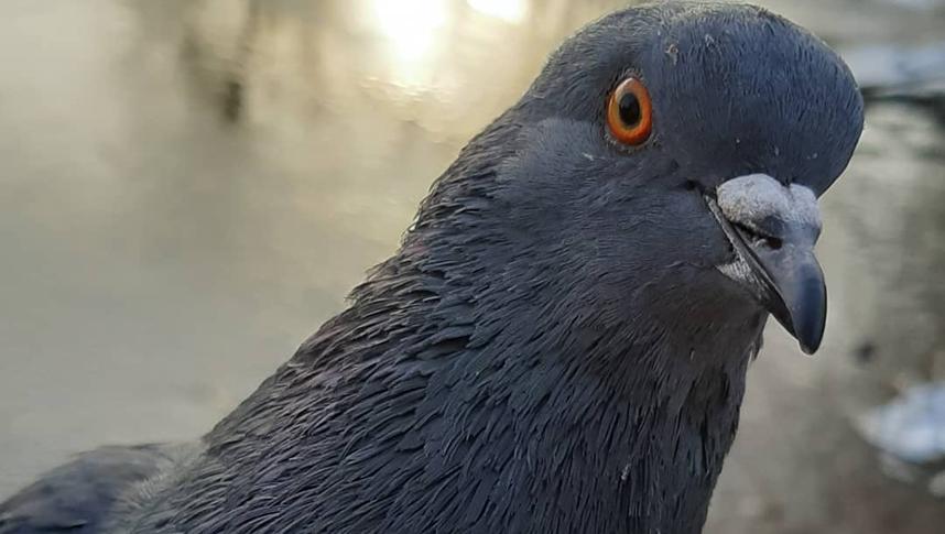 Московские орнитологи уверены, что городские птицы по нам не соскучились. Фото instagram.com/na_pole_on_oks