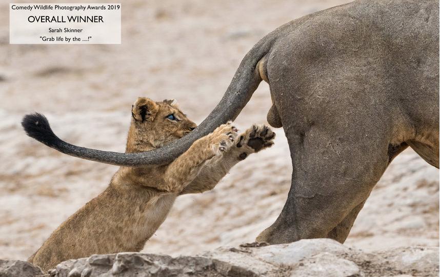 "Победитель Comedy Wildlife Photography Awards 2019. Фотография ""Схвати жизнь за..."". Фото Sarah Skinner / Comedy Wildlife Photography Awards"