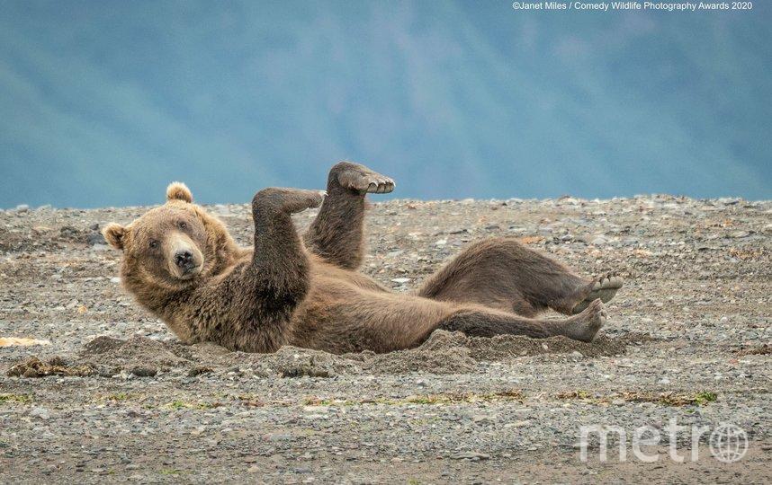 "Фотография ""Танцы на песке"". Фото Janet Miles | Comedy Wildlife Photography Awards"