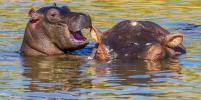 Забавные фотографии диких животных, которые поднимут вам настроение