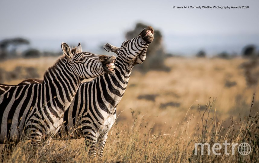 "Фотография ""Посмешище"". Фото Tanvir Ali | Comedy Wildlife Photography Awards"