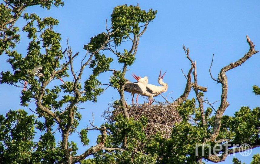 "Проект ""Белый Аист"" опубликовал фото счастливых родителей. Фото White Stork Project | скриншот Twitter @ProjectStork"