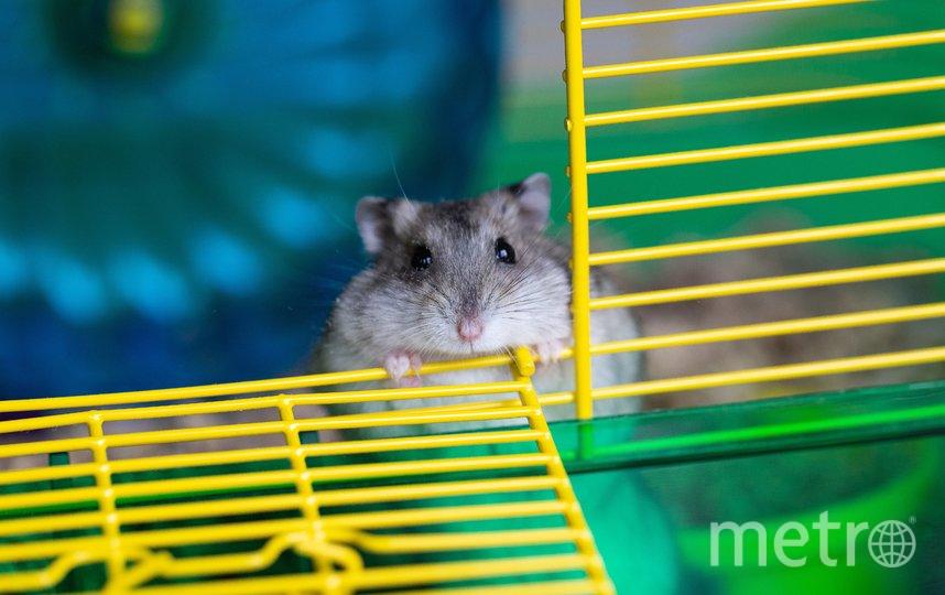 В разных клетках сидели грызуны с разными показателями здоровья. Фото Pixabay