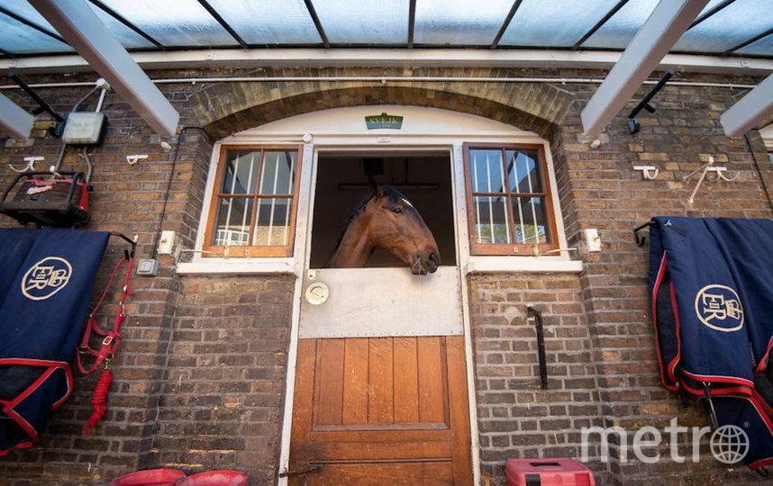 Королевские конюшни. Фото Getty