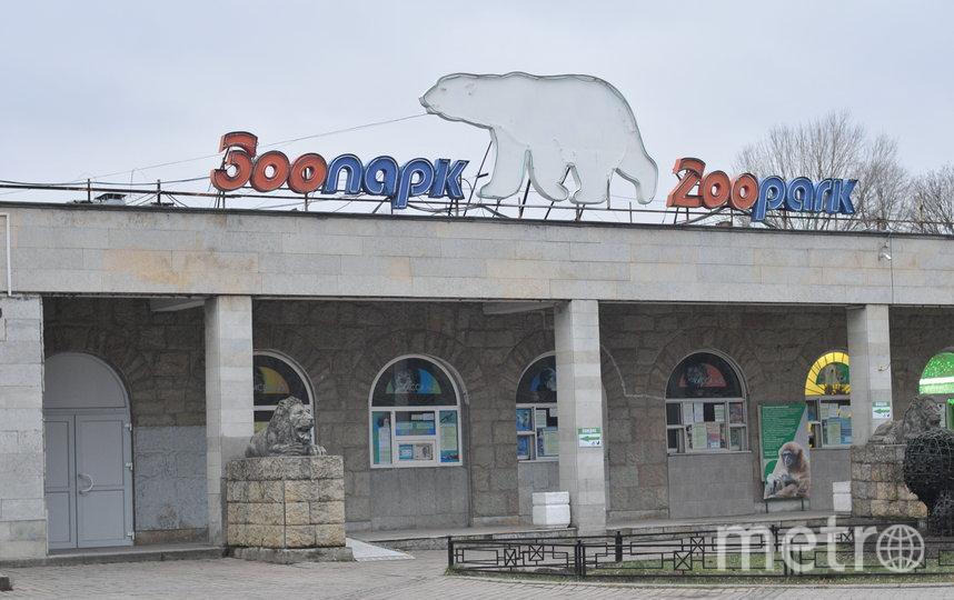 """Ленинградский зоопарк работает без посетителей. Фото """"Metro"""""""