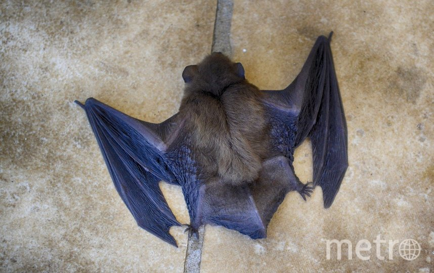 Власти Ухани ввели запрет на охоту на диких животных, незаконную торговлю ими и потребление их мяса в пищу. Фото pixabay.com