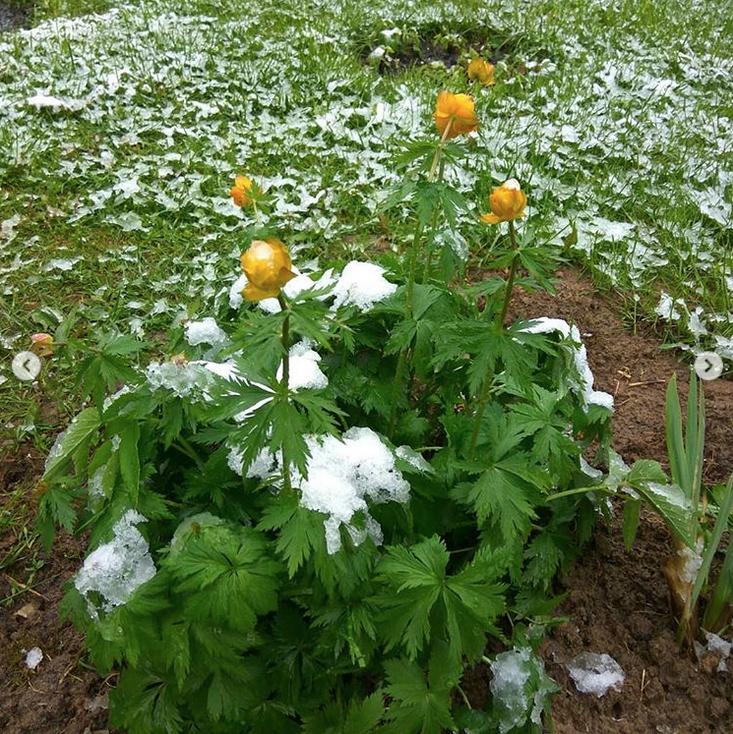 """""""Как хочется верить, что этот снег последний. Цветы в снегу. Ёлочки в снегу"""". Фото Instagram: @aleksandrafabrina"""