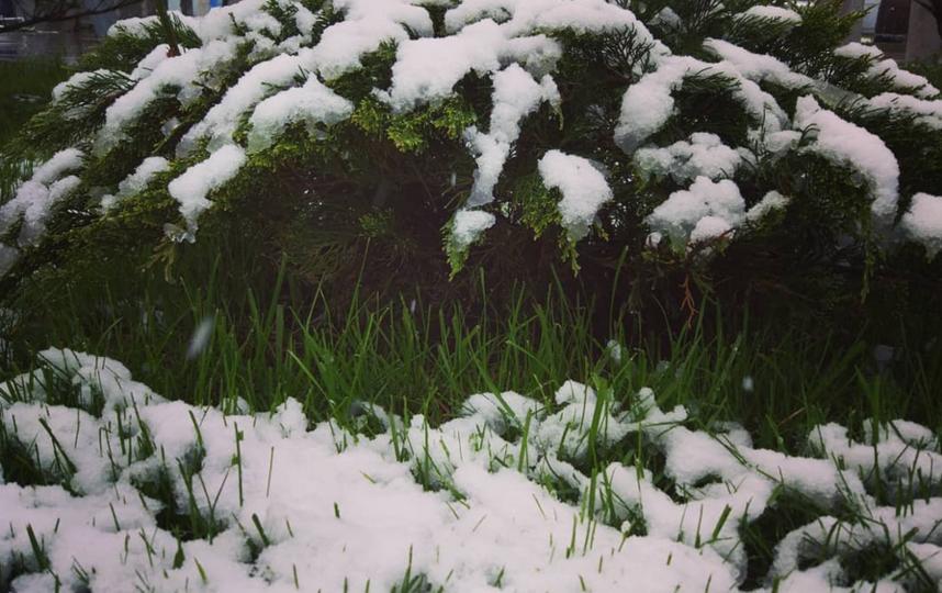 """""""Май холодный — год хлебородный. Ну судя по погоде, хлеб у нас будет прям на полях расти"""". Фото Instagram: @pusik131"""