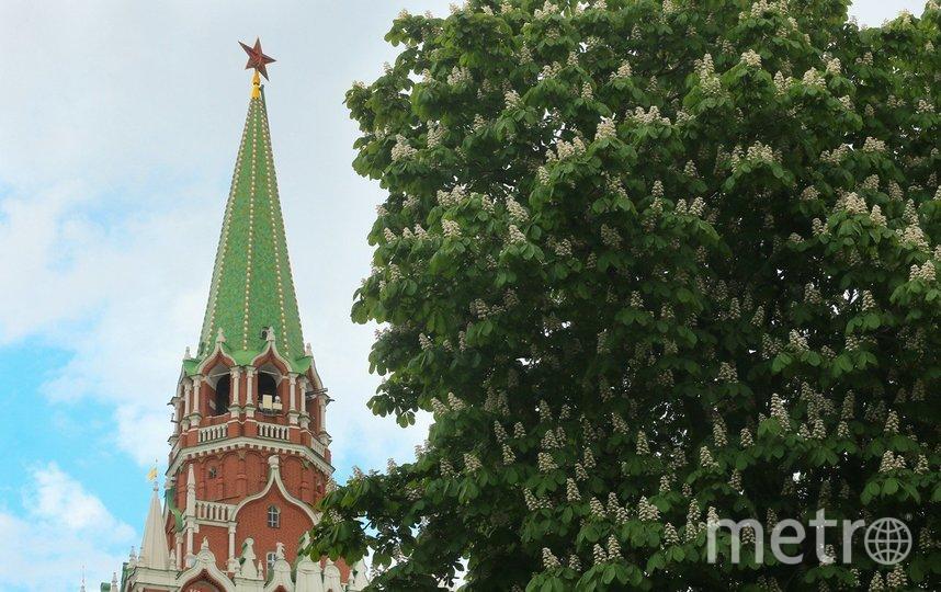 """Цветение каштановых деревьев в столице. Май 2020 г. Фото Василий Кузьмичёнок, """"Metro"""""""