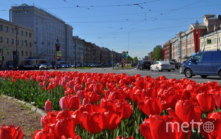 Архивное фото комитета по благоустройству. Фото gov.spb.ru
