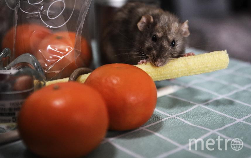 Всё дело в еде. Фото Getty