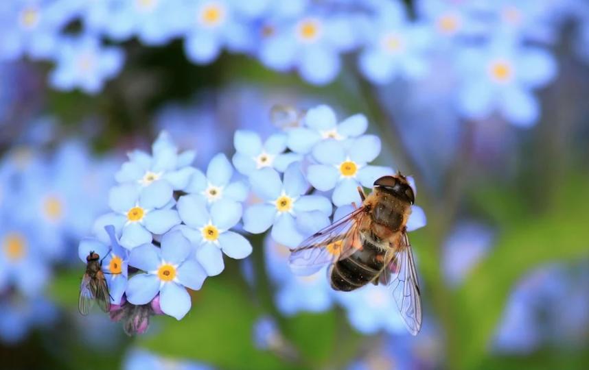 Заразиться коронавирусом от насекомых невозможно, заявили в Роспотребнадзоре. Фото Pixabay
