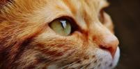 В России кошку поместили на карантин после обнаружения у неё коронавируса