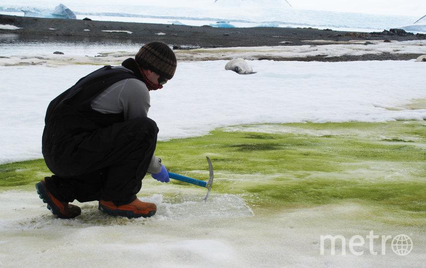 """Так происходит """"забор"""" водорослей для их дальнейшего изучения в лаборатории. Фото Фото предоставлены героем материала"""