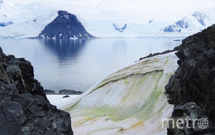 """Зелёные водоросли """"растут"""" прямо из снега в Антарктиде. Фото Фото предоставлены героем материала"""