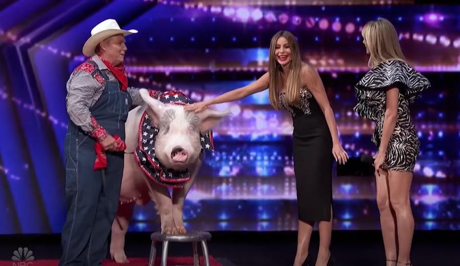 София Вергара просто погладила свинью. Фото скриншот с видео, Скриншот Youtube