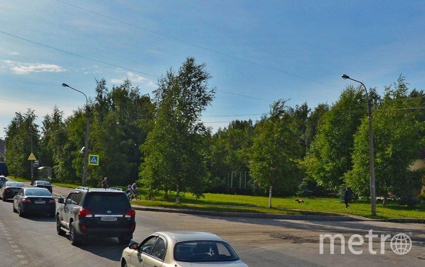 Юнтоловский лесопарк. Фото Яндекс.Панорамы