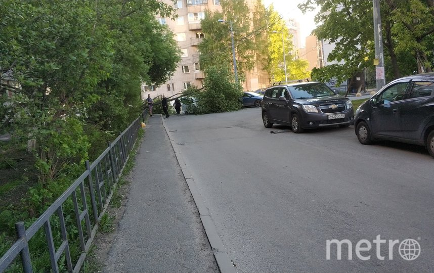 Дерево упало на Сикейроса в субботу. Фото ДТП/ЧП, vk.com