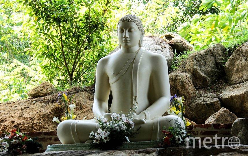 """На Шри-Ланку едут любители экзотики. Фото pixabay.com, """"Metro"""""""