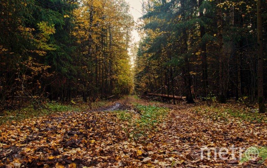 """В национальном парке """"Лосиный Остров"""" надо быть особенно внимательным к клещам. Фото elkisland.ru"""