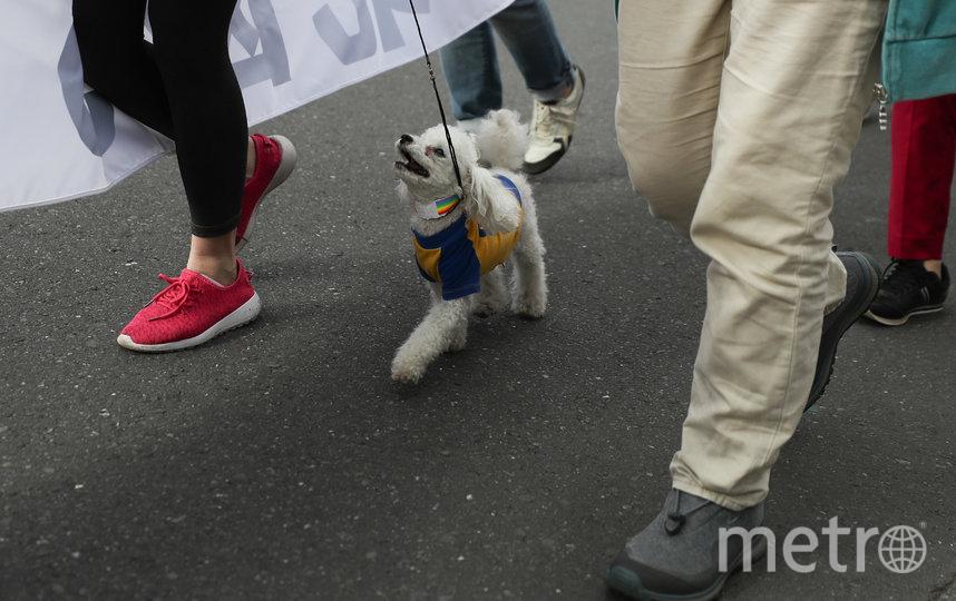 Выгуливать собак и других домашних животных теперь можно только на поводке. Фото Getty