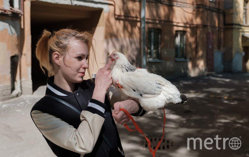 """Несушка стала звездой района. Фото Алена Бобрович, """"Metro"""""""