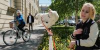 На Васильевском острове курицу выгуливают, как собаку – фото