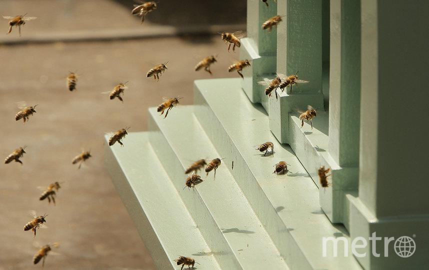 """По словам хозяина, его пчёлы работают на """"отдел по борьбе с беспорядками"""". Фото Getty"""