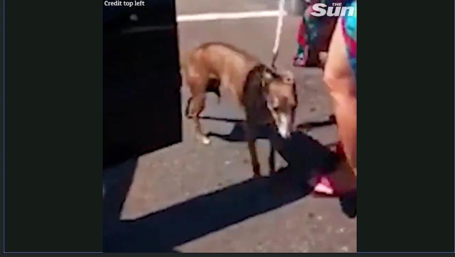 Спасённая собака. Фото скриншот с видео The Sun