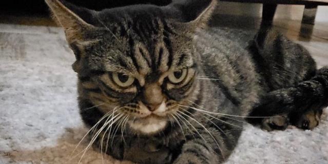 Любители забавных кошек обратили свой взор на новую звезду – Кицю.