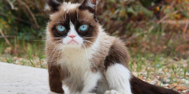 Оригинальная кошка Grumpy Cat, настоящая кличка – Соус Тардар.