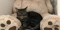 В Сети появилась конкурентка Grumpy Cat и все от неё в восторге