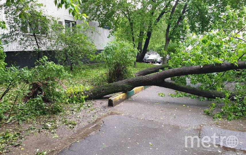 """Это дерево на Инициативной улице в районе Фили-Давыдково (ЗАО) тоже уже распилили, чтобы вывезти. Фото из telegtam-канала """"Московские новости"""""""