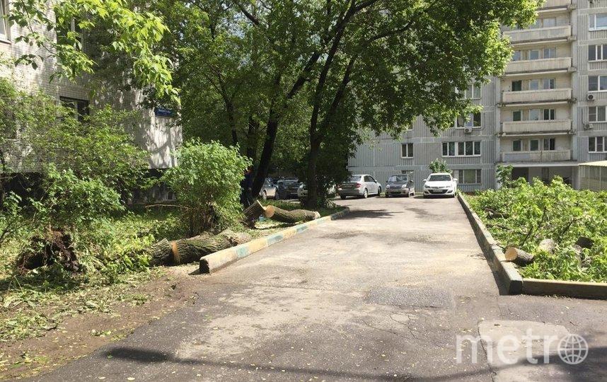"""Дерево на Инициативной улице в районе Фили-Давыдково (ЗАО) тоже уже распилили, чтобы вывезти. Фото из Telegram-канала """"Московские новости"""""""